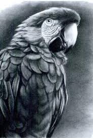 realistic animals to draw. Plain Realistic Draw Realistic Animals And Birds Intended To S