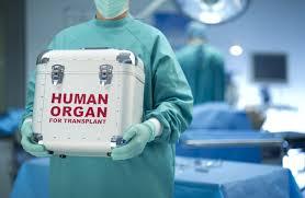 persuasive essay example archie smith boy wonder essay airline organ donation example essays