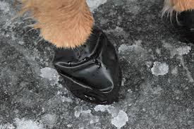 pawz dog boots are waterproof and perfect for winter conditions protect those paws from ice