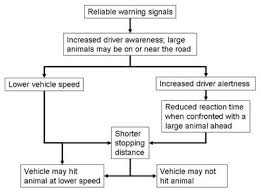 Animal Speed Chart Chapter 5 Wildlife Vehicle Collision Reduction Study