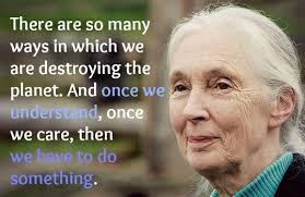 These Jane Goodall Quotes Will Inspire You To Save The World Beauteous Jane Goodall Quotes