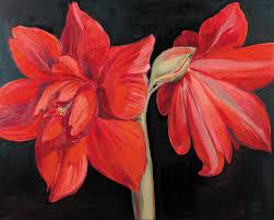 red amaryllis i