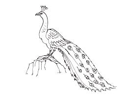 S Coloriage Un Oiseau Qui Vole L L L Duilawyerlosangeles