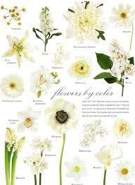 Flowers By Color Chart Flowers White Wedding Flowers