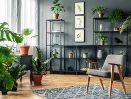 ideas to decorate indoor plants in your