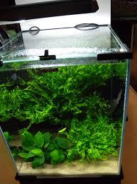 Regolare il gh in acquari di acqua dolce valori chimico fisici