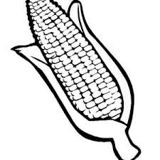 Small Picture One Beuatiful Corn Coloring Page One Beuatiful Corn Coloring Page