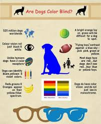 your dog colorblind