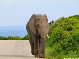 what should i write my college about essay on elephant essay on shooting an elephant s architects