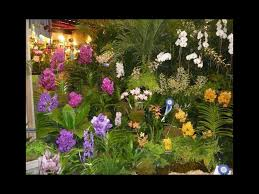 some of the exotic flowers on display at past fort lauderdale orchid shows