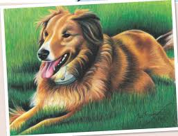 realistic drawings of animals in color. Painting Furry Animals With Pencil Throughout Realistic Drawings Of In Color