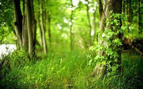 47+] Green Forest Wallpaper HD on ...