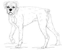 Young Boxer Dog Coloring Page Free Printable Coloring Pages