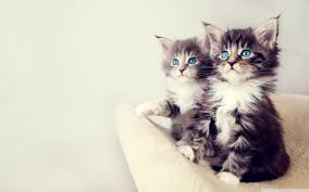 cute kittens wallpapers for mobile. Simple For Wide  Intended Cute Kittens Wallpapers For Mobile U