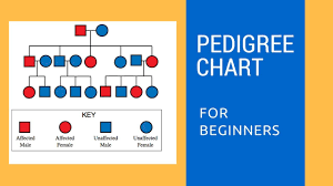 Pedigree Chart Key Pedigree Charts For Beginners