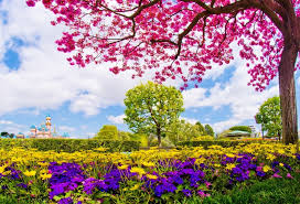 Cherry Blossom Backdrop Scenery Photography Backdrops Cherry Blossom Trees In The Garden Landscape Background