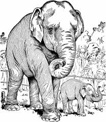 Small Picture Coloring Pages Free Printable Tryonshortscom Elephant Elephant
