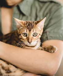 Signs Your Pet Is In Pain Caring Pathways Home Euthanasia Hospice