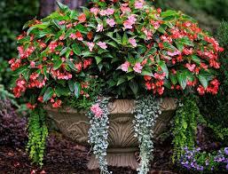 Native Plant Shade Container GardenContainer Garden Ideas For Shade