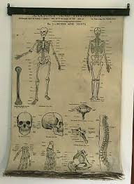 19 Vintage Medical Anatomy Charts Posters Curiosities