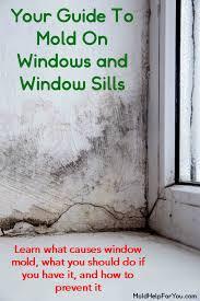 mold on windows and window sills