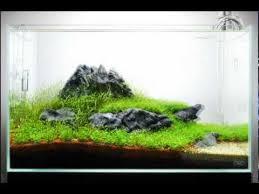 the power of ada a 60 p nature aquarium
