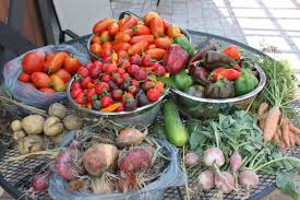garden harvest. homely idea garden harvest maximize your 30 tips for more prolific production