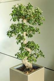 interior landscaping office. Office Live Plants. Interior Landscaping