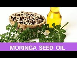 how to extract moringa seed oil at home