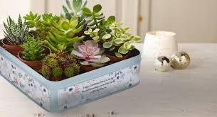 Christmas Gift Plants  Send Plants Online  Flowercard Christmas Gift Plants