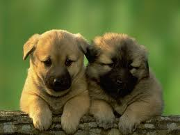 cute dogs and puppies.  And Cute Fluffy Puppies Throughout Dogs And I