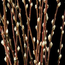 Preserving Tree Branches For Decoration Pussy Willow Decorative Branches