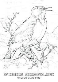 Bird Coloring Pages Printable Free Birds Angry Go Jadoxuvaletop
