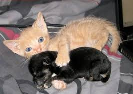 cute puppy and kitten best friends. Cute Kitten Puppy Pictures And Friendship Throughout Best Friends