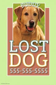 Lost Pet Flyer Maker Customizable Design Templates for Lost Animal PosterMyWall 42