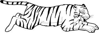 Tigre In Corsa Disegni Da Stampare Di Animali Disegni Da Colorare