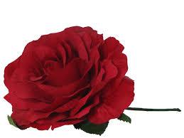 Bildergebnis für rote Rose