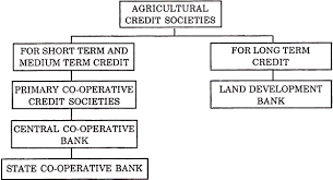 essay co operative banks banking the credit committees have been classified as follows for the formation of co operative banks