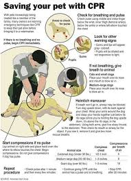 Handy Cpr Chart For Your Pet Pets Dogs Dog Care