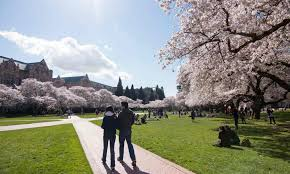 university of washington essay prompts