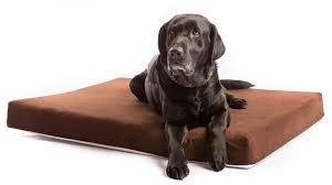 big dog furniture. fine dog heavy duty extralarge orthopedic big dog bed in big dog furniture