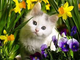 Cute Spring Animals Wallpapers ...