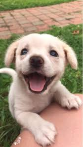 cute puppy. Fine Cute Hereu0027s A Picture Of Cute Puppy To Brighten Up Your Day  Xpost From  Raww  Throughout Cute Puppy O
