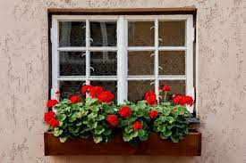 ✓ free for commercial use ✓ high quality images. 10 Best Flowers For Window Boxes Urban Garden Gal