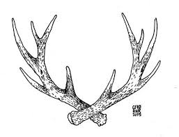 Image result for antlers animation