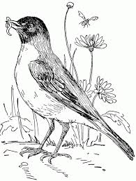Small Picture Robin in Flower Garden Coloring Page Download Print Online