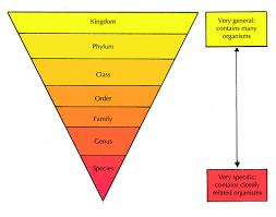 Classification Of Living Things Biodiversity Siyavula