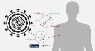 BioNTech, Sinovac ve Sputnik aşılarının farkları neler, hangi yöntemlerle  üretiliyor? - BBC News Türkçe