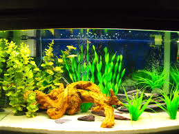 60 gallon mixed fish w/driftwood and fake plants | aquarium | Pinterest |  Fake plants and Aquariums