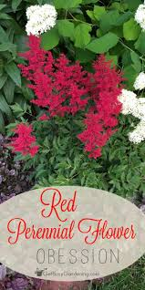 Small Picture Best 20 Red perennials ideas on Pinterest Red plants Flowers